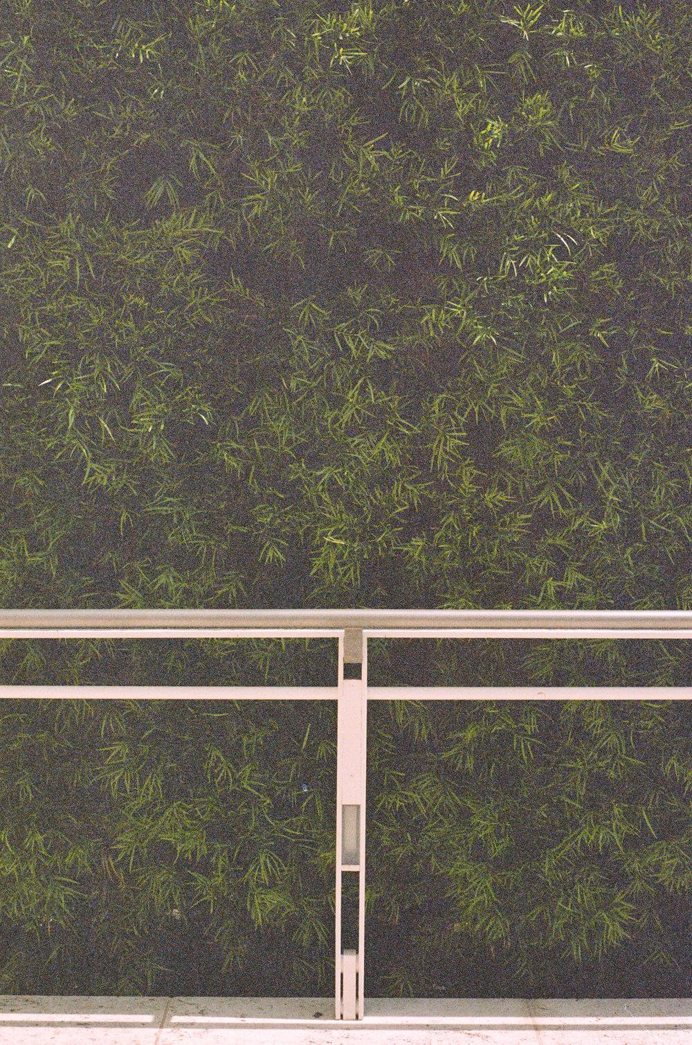 getty-hedge-film.jpg