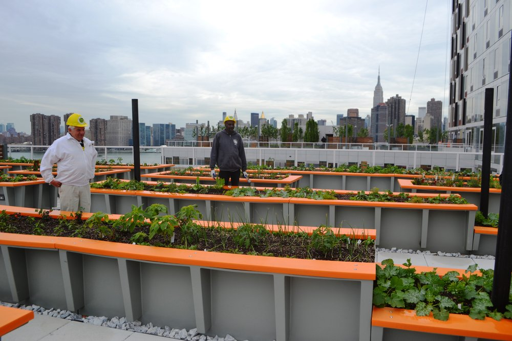 Rooftop Farm at Hunters Point South