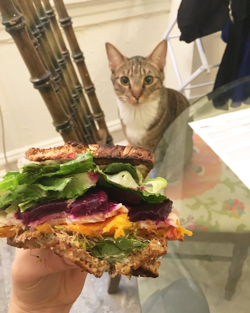 After this picture was taken, he jumped up and grabbed a beet out of the sandwich. #vegancat