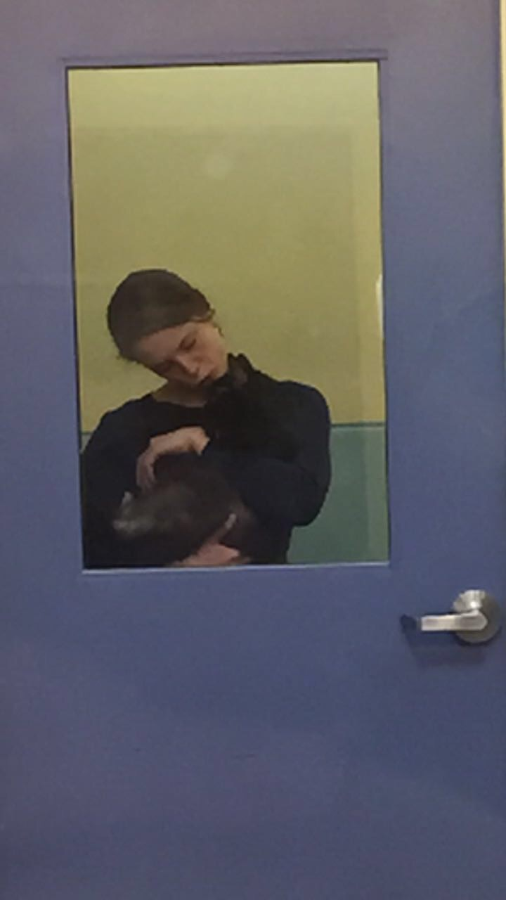 Taken by Ahna Kollar as she visited with another cat at the Richmond SPCA.