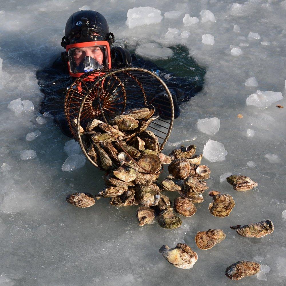 ice diver.jpeg