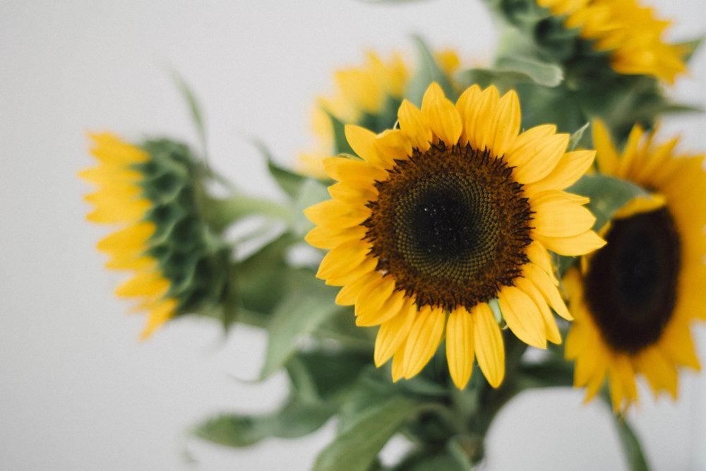 2.) Flowers -