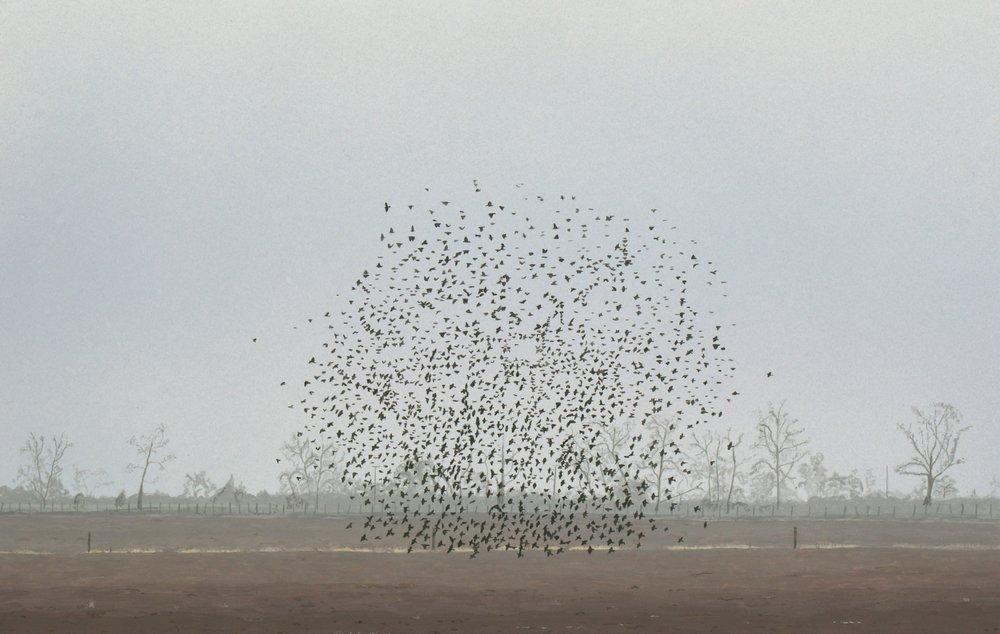 5 Birds.JPG