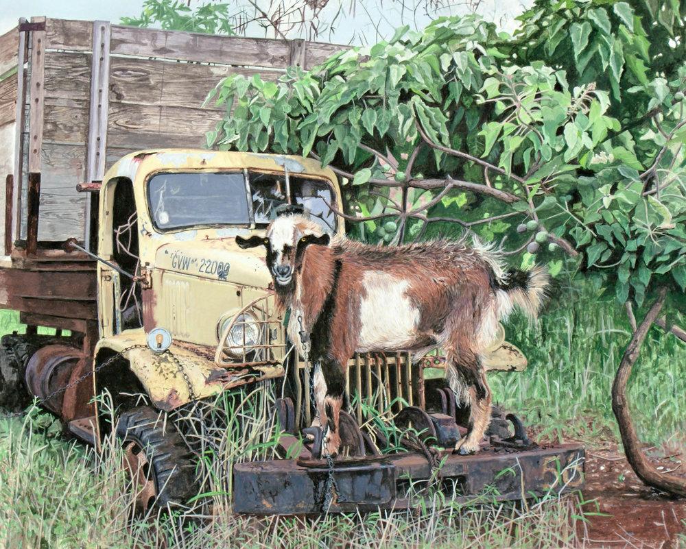 21 Maui Goat.jpg