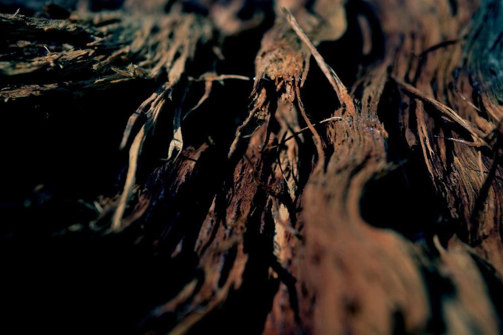 wood 03.jpg