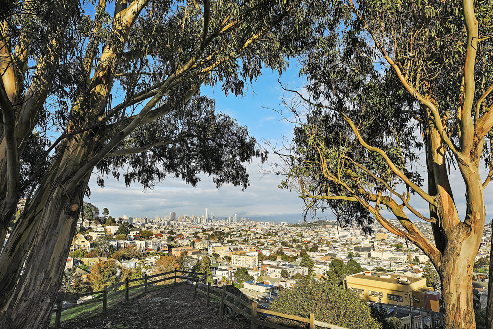 The stunning vista from Billy Goat Hill just a few steps away.