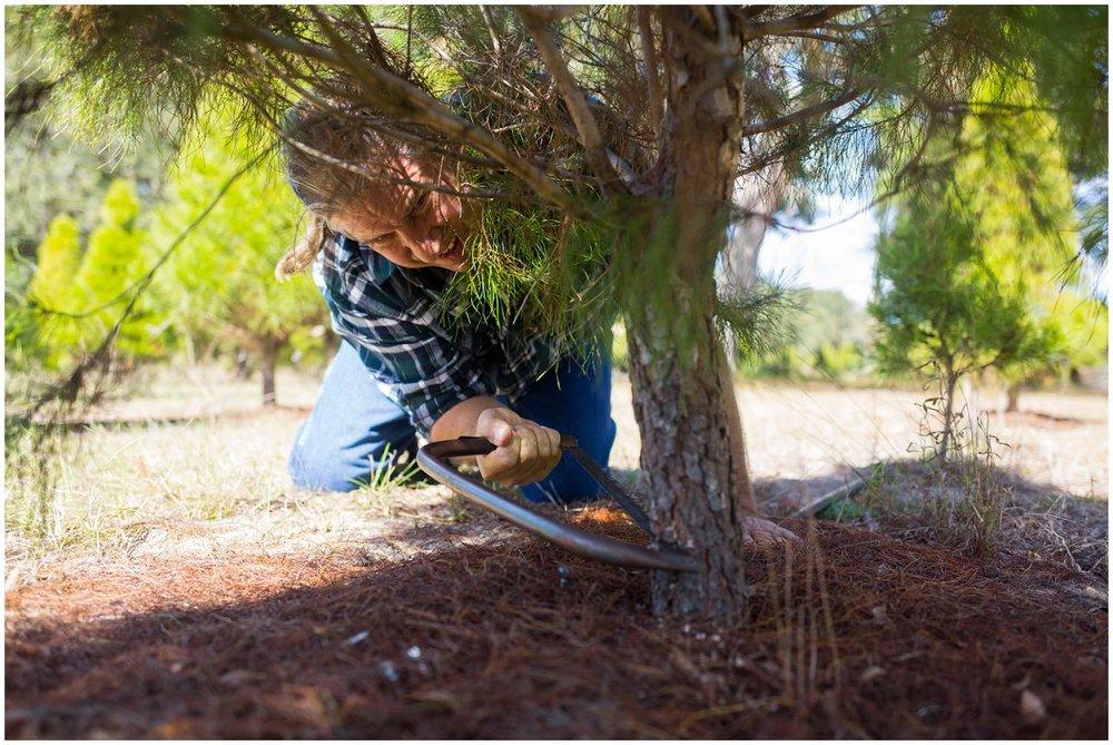 Mount-Dora-Christmas-tree-farm.jpg