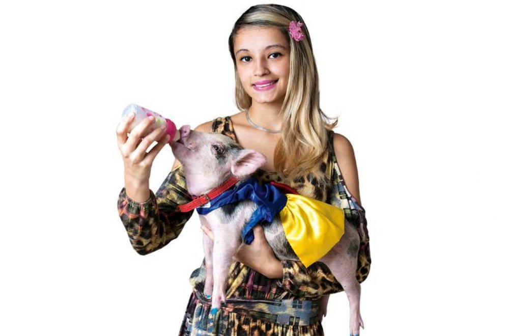 Domestic piglet:Teacup pigs arise as house pets and their defenders guarantee - they are cleaner than a dog.