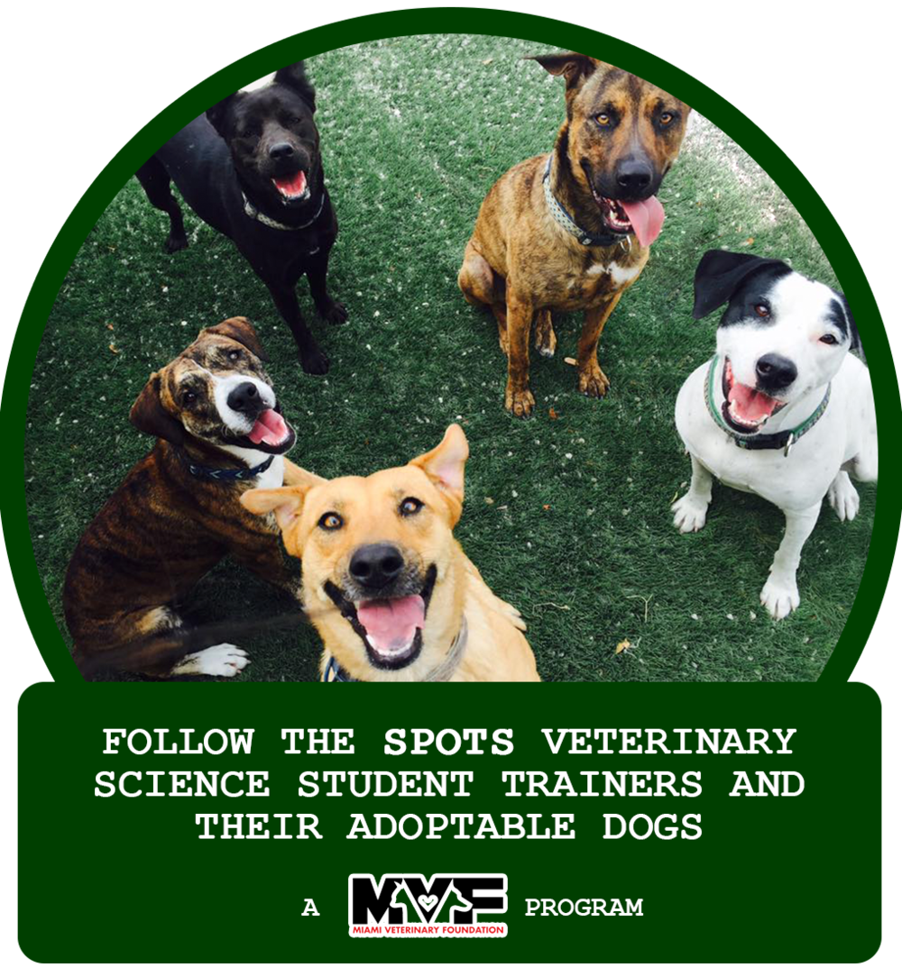 Click on the icon to follow the SPOTS students of Felix Varela High School Veterinary Sciences Magnet program and their rescue dogs!