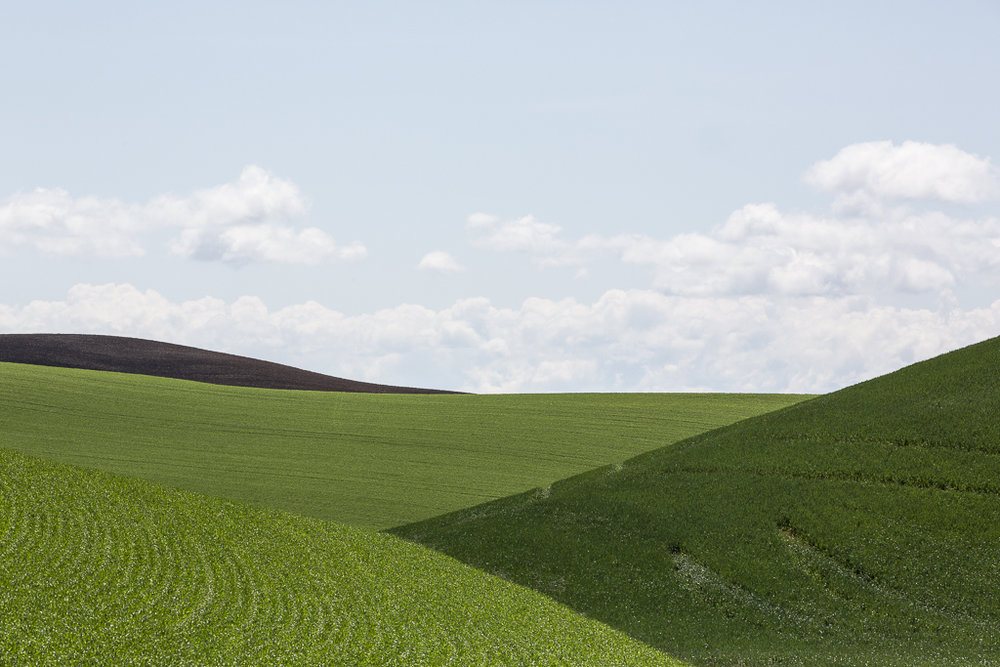 Landscapes_Palouse, WA_01