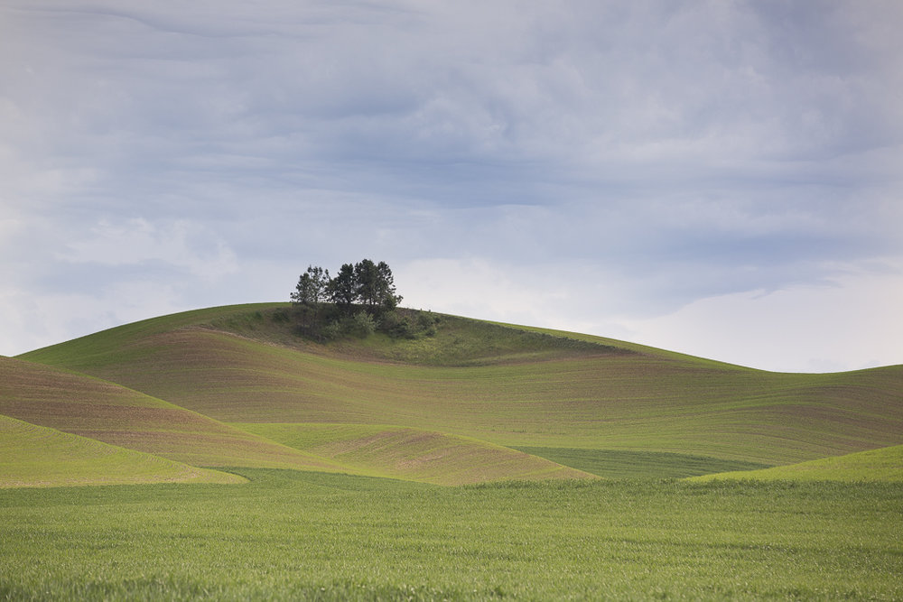 Landscapes_Palouse, WA_08