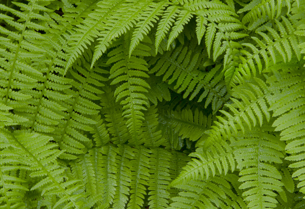 UpClose_Ferns_01