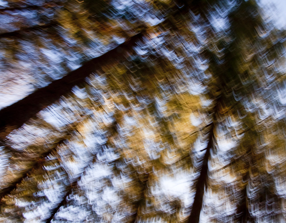 Treescapes_11