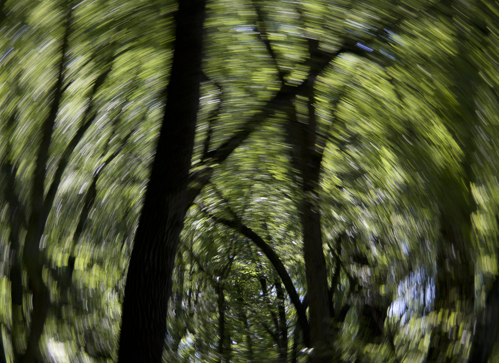 Treescapes_10_ForestTunnel