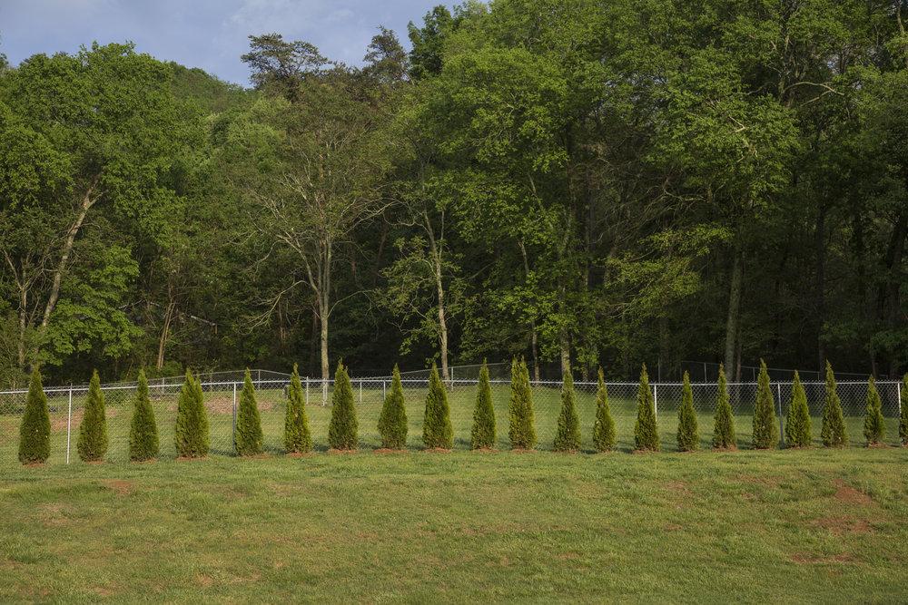 Tree Lined Yard