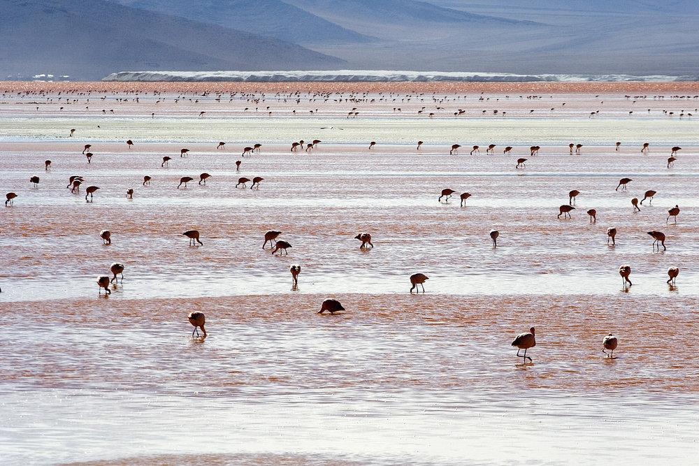 Salar de Uyuni – Flamingos