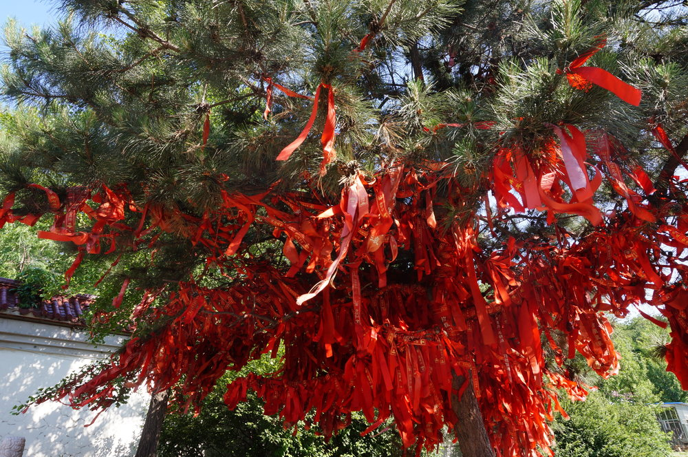 Jade Buddha Palace – Wishing Tree