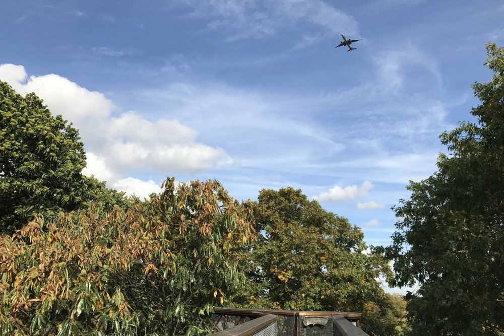 Kew Gardens – View of aircraft overhead
