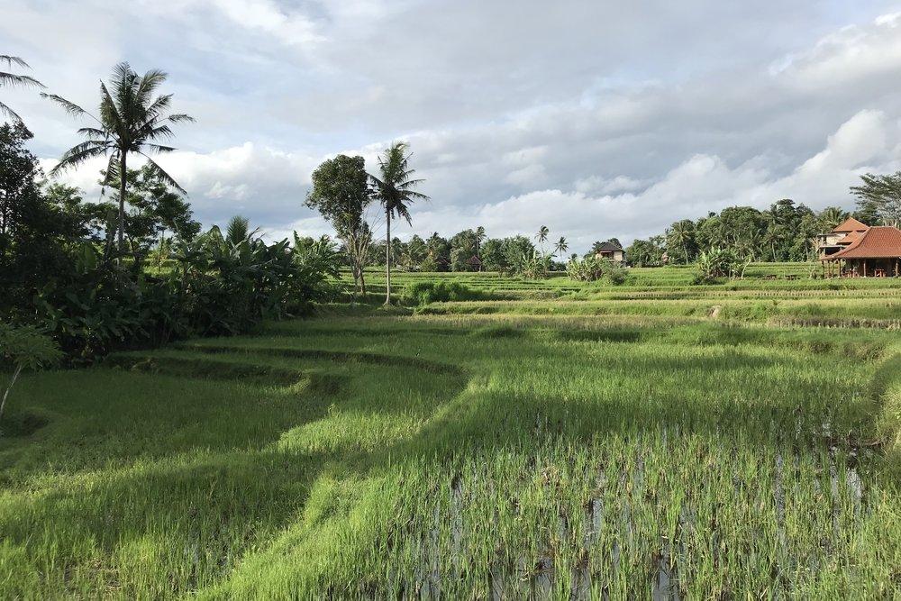 Campuhan Ridge, Bali