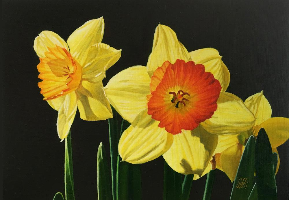 Daffodils 001-01.jpg