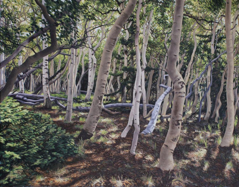aspen grove 22x28 2500.jpg