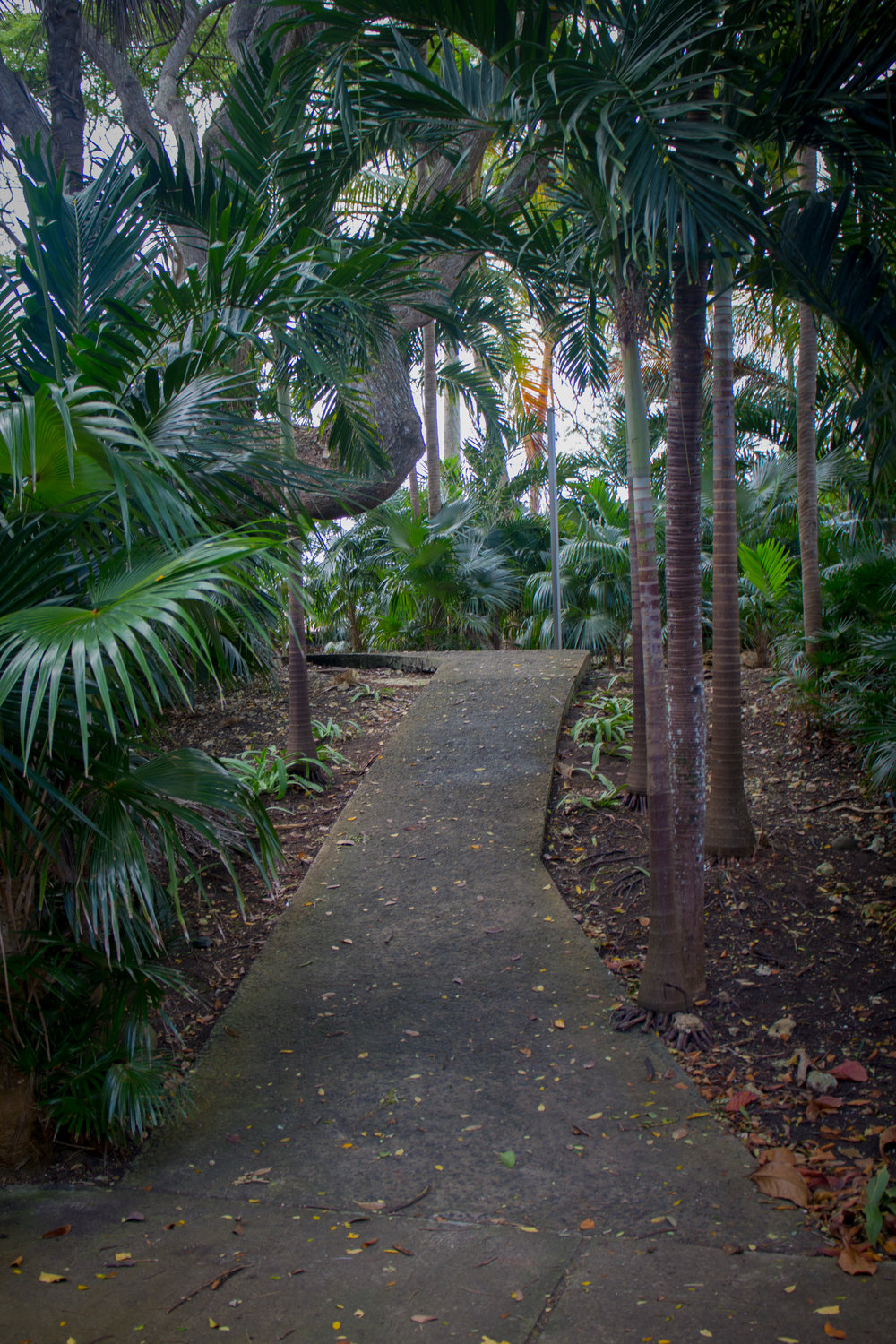 Path up to M. Damoiseau's residence