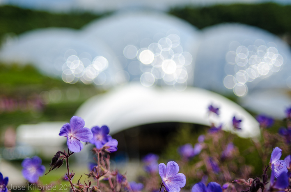 Flowers and dome