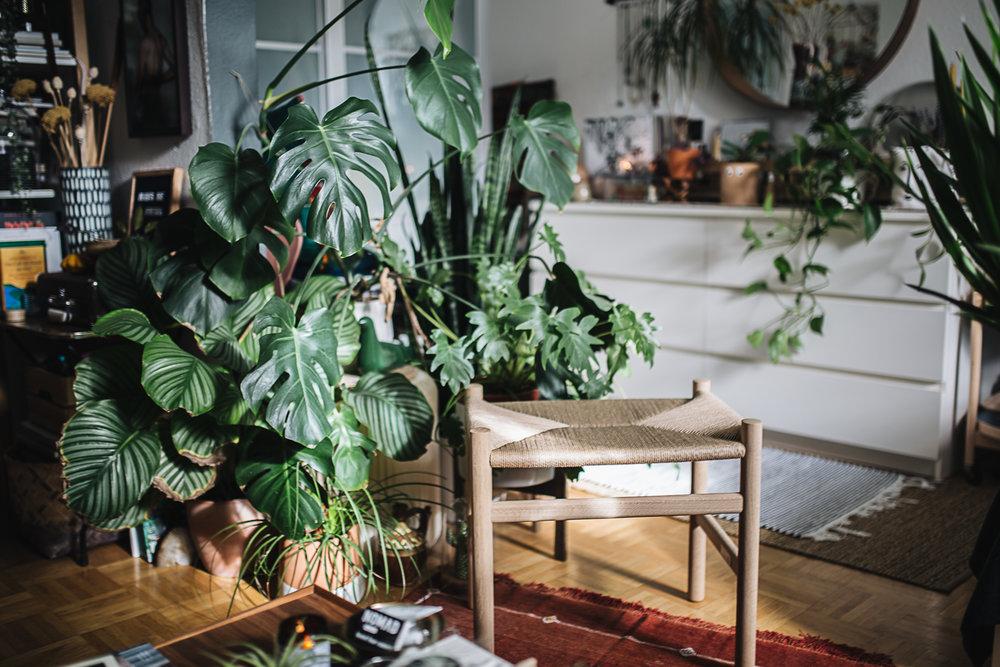 Plantstory+Igor+Josif_9.jpg