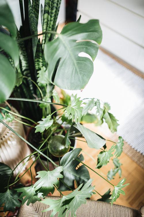 Plantstory+Igor+Josif_11.jpg