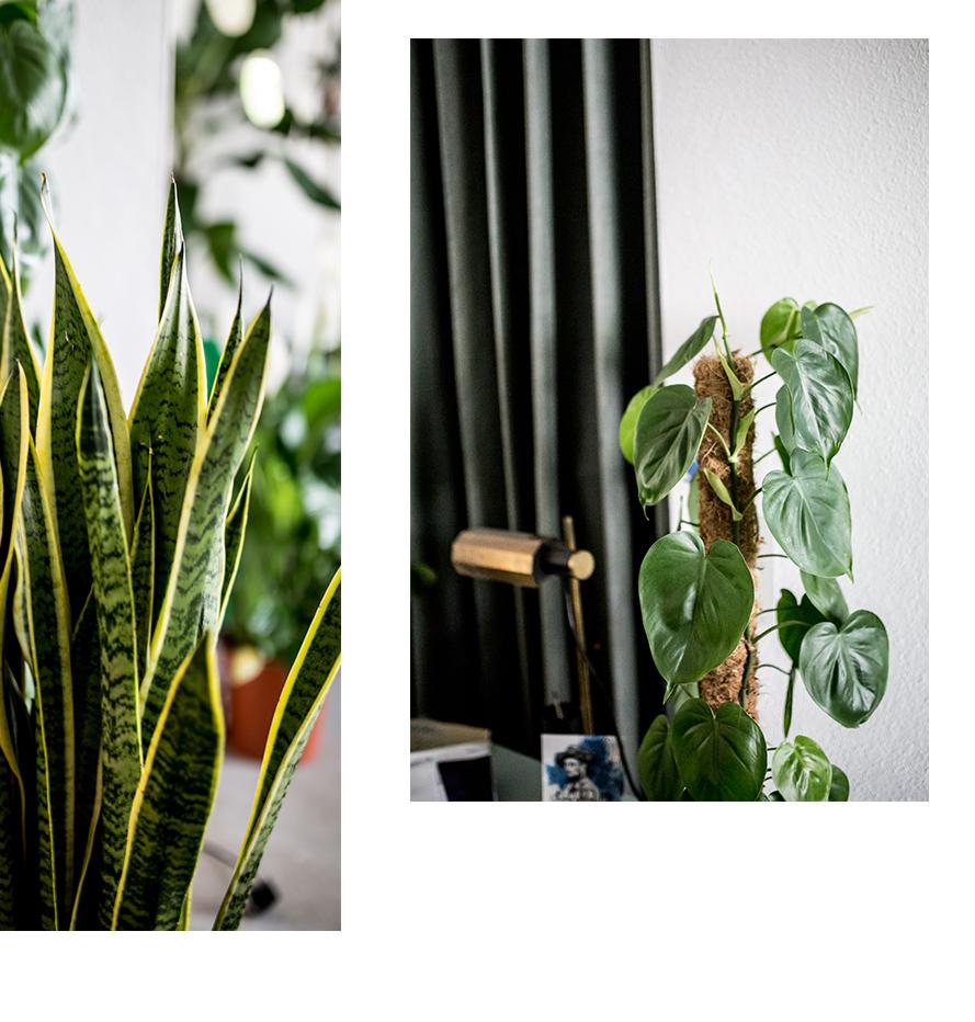 Bogenhanf&Philodendron.jpg