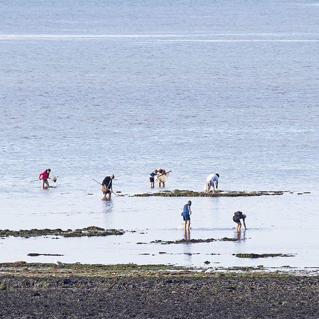 La pêche à pied & la mytiliculture : les moules de bouchot de la baie de somme  La côte Picarde produit deux types de moule : les sauvages, de Mers-les-Bains aux falaises d'Ault (côte du Vimeu), et les moules de bouchot, au nord, jusqu'à la baie de Somme et la côte du Marquenterre.  En hiver, on ne trouve plus de moules de la Baie de Somme chez le poissonnier ou dans les restaurants de la côte… avec l'arrivée du printemps, la saison reprend pour les mytiliculteurs.  Le temps d'une sortie, vous deviendrez vous même un pêcheur à pied de la Baie de Somme ou redeviendrezl'enfant que l'ona tous été qui pêchaitau bord de la mer des centaines de trésors dont il ne connaissait pas l'origine.  HÉBERGEMENT DE VACANCES EN BAIE DE SOMME  Plus d'information ici : https://www.unepivert.com Instagram: Un Épi Vert 💚  #baiedesomme #vacances #unepivert #sejour #experience #weekend #vacanceenfamille #reservenaturelle #france #hebergement #location #mussels #moulesdebouchot #moules #peche #tourisme