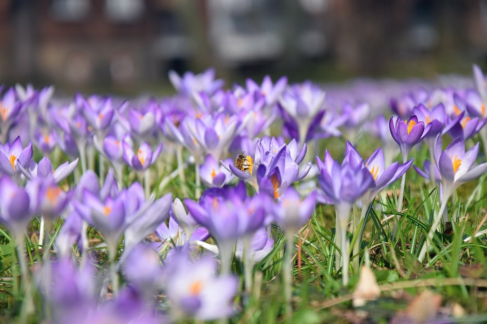 Spring Has Sprung in the Nation's Housing Markets | Utah Listing Pro | Rising rates, Real Estate, Home Sweet Home, Buy a Home, Buying Tips