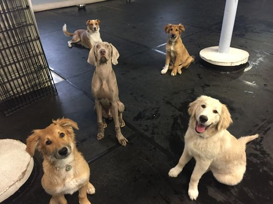 Dog Meets World Doggy Daycare  - We are happy to partner with Dog Meets World Doggy Day Care.  For more information please visit https://dogmeetsworld.ca/