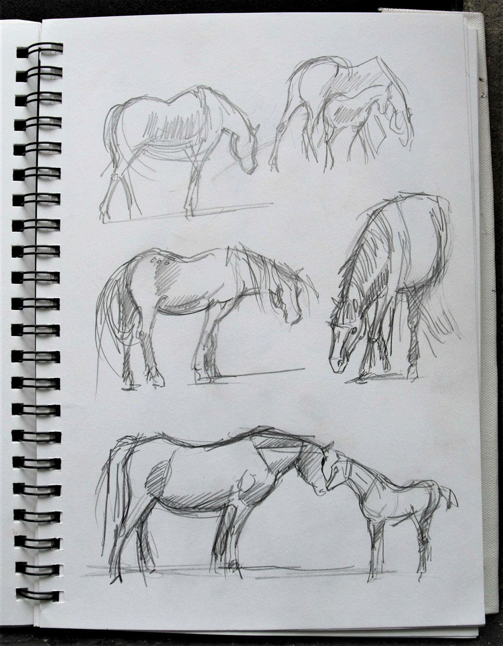Comparing proportions of mare and foal
