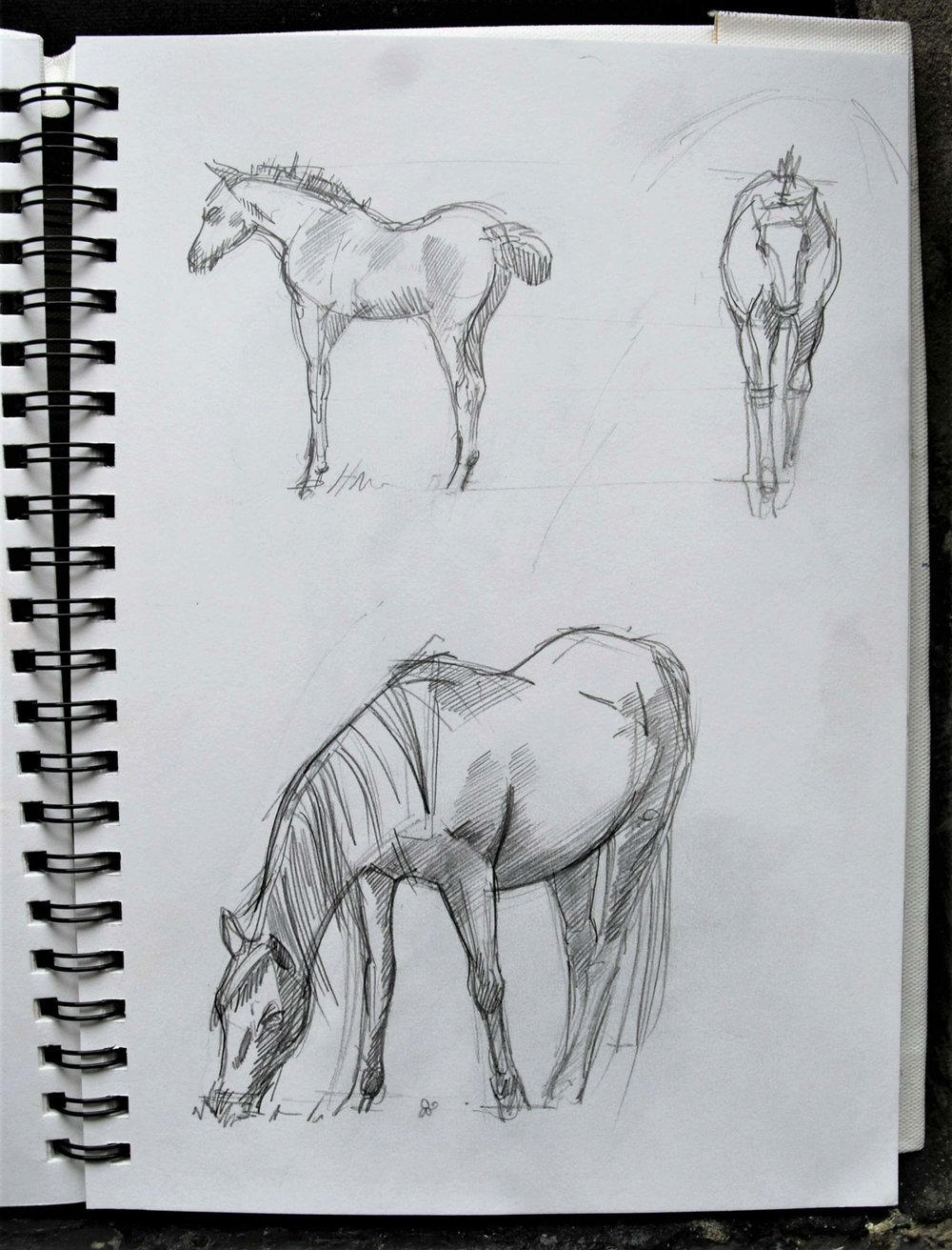 Foal profiles and a grazing mare