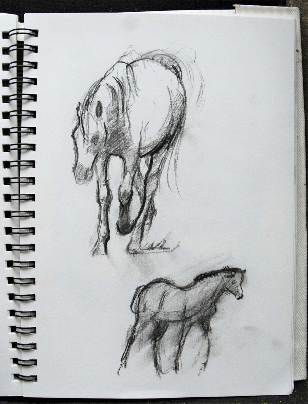 Studies of horse gait