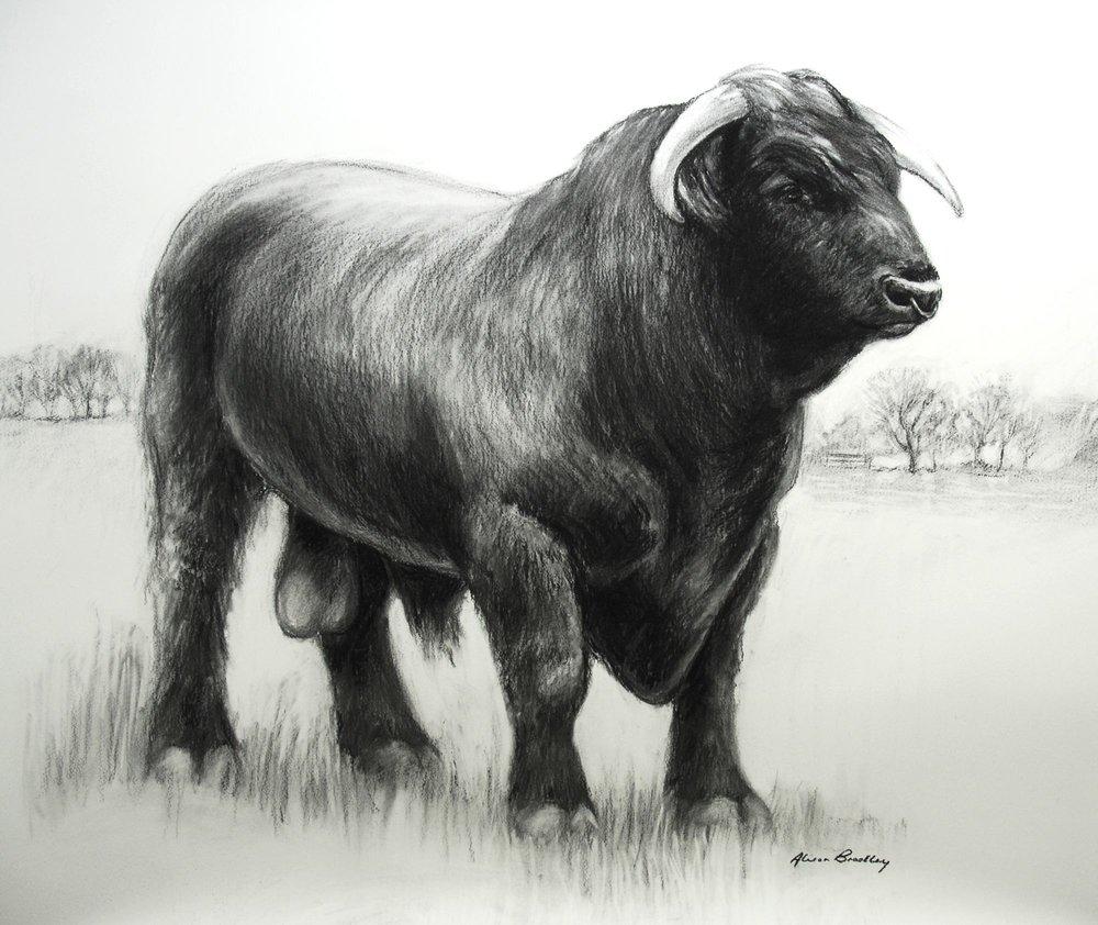 Black Ox