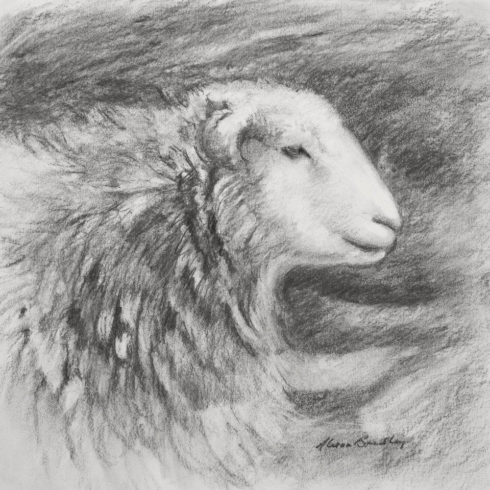 herdwick-study-1-cumbria-sheep.jpg