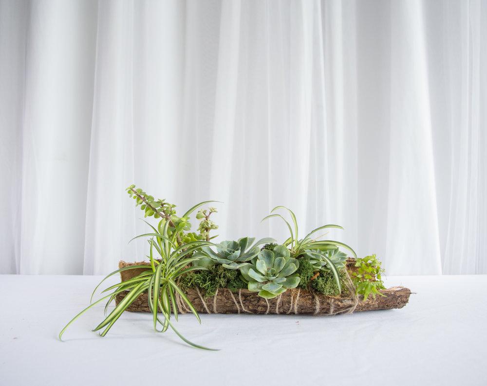 The Dogpatch - Nhánh cây Hoa Sen Đá 01Kích thước: 40cm X 10cm390.000VND