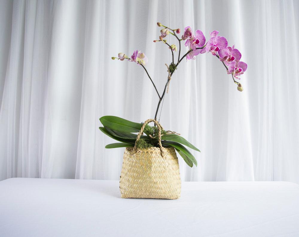 single orchid 1.jpg