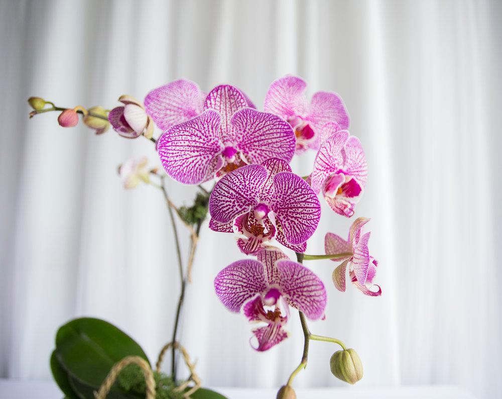 single orchid 3.jpg