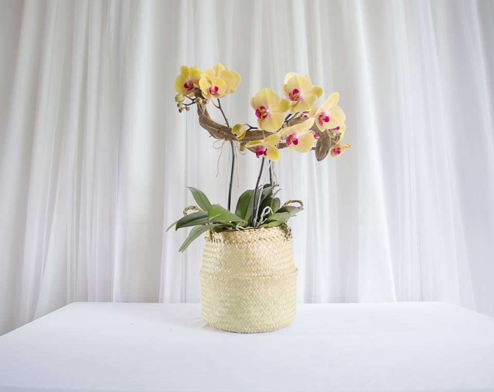 Triple Orchid.jpg