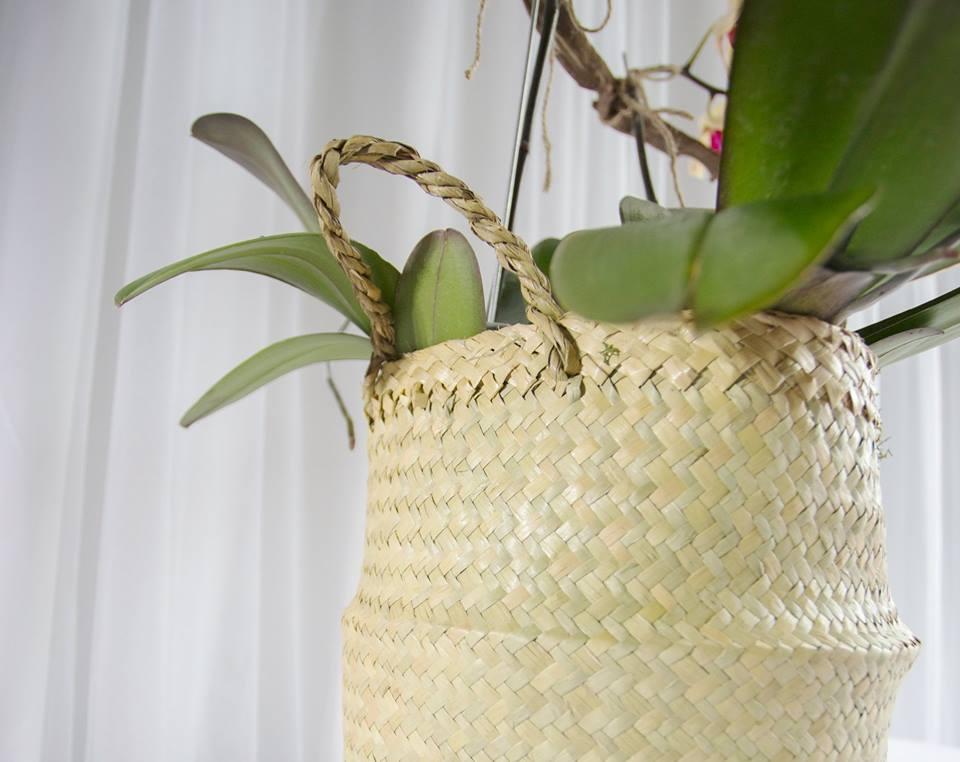 Triple Orchids 2.jpg