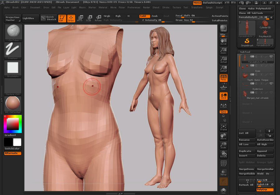 Female_Anatomy_04.jpg