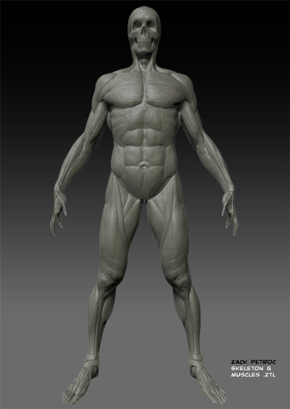 SkeletonMuscles_01.jpg