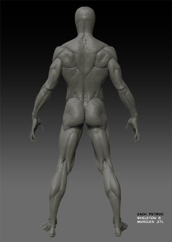 SkeletonMuscles_02.jpg