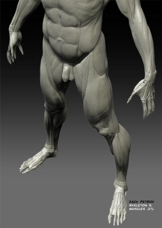 SkeletonMuscles_03.jpg