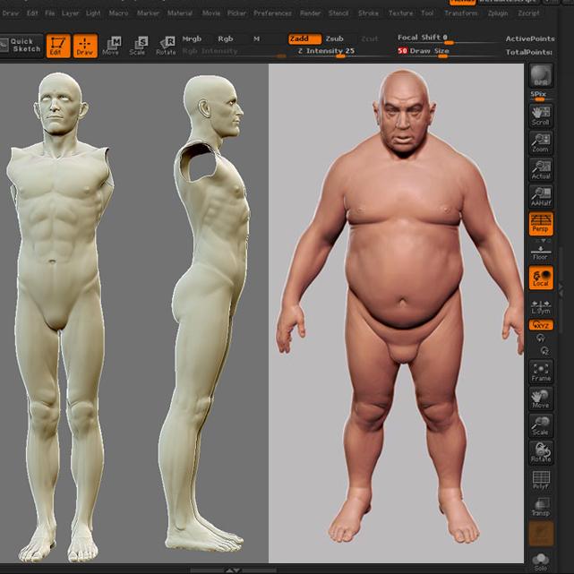 Male Anatomy Bundle Ztl Storymold