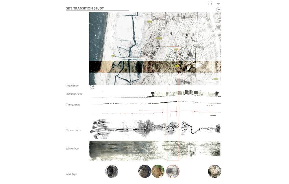 Site Transition Study