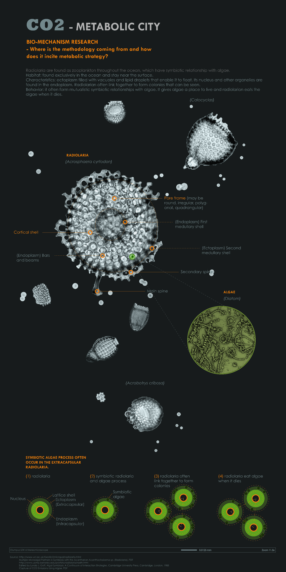 Bio-mechanism research on radiolaria and algae (which has 200 times ability in CO2 absorption than certain trees)